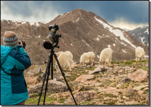 Mountain goats & photographer