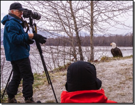 Bald eagle & photographers