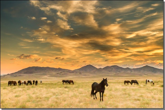 Wild horse herd at sunrise